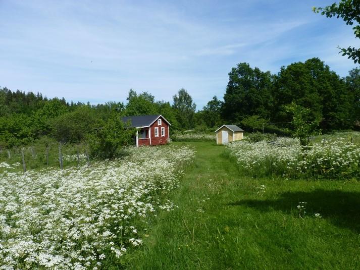 ferienhaus 549 kleines ferienhaus umgeben von herrlicher natur sm land. Black Bedroom Furniture Sets. Home Design Ideas